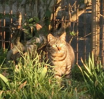 180505-野良猫さん-5