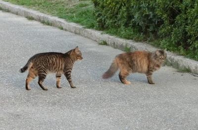 180523-野良猫さん仲良し-1