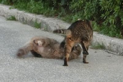 180523-野良猫さん仲良し-2