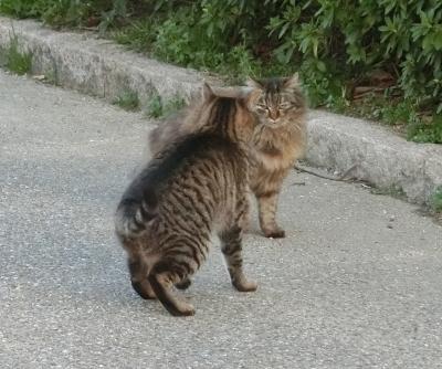 180523-野良猫さん仲良し-3