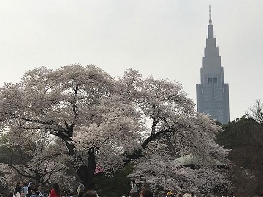 新宿御苑0327NTTタワー