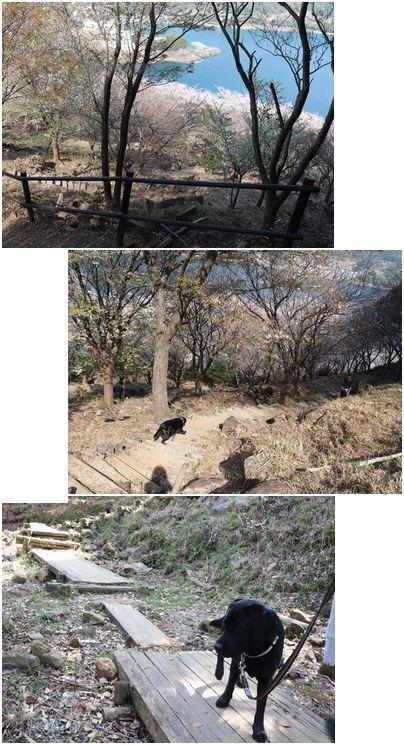 20180329 IMG_4333 桜の道 下り