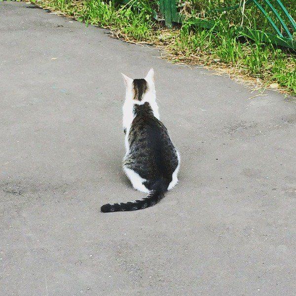 猫inねこ
