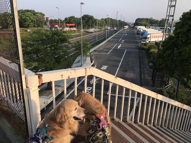 高速見える橋の上