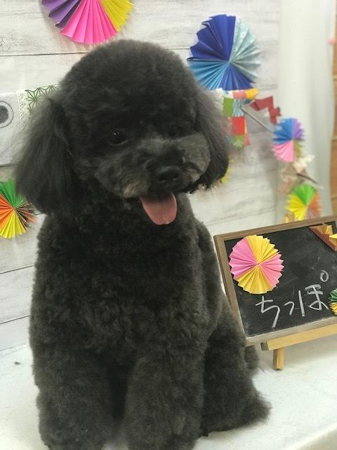 ちっぽ2018510