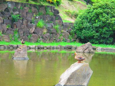 2015-06-yamapark20.jpg