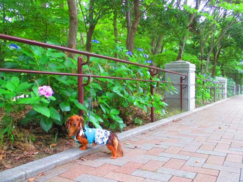 2015-06-yamapark26.jpg