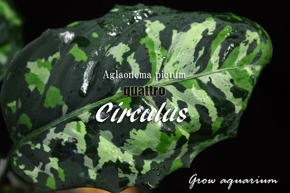 インスタグラム グロウアクアリウム Grow aquarium