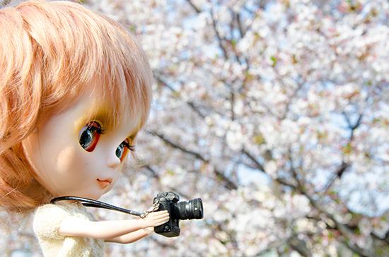 20180401ナナシお花見-2