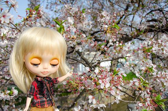 20180401ナナシお花見-4