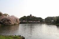 三渓園 桜花見 撮影 お出かけ 2018年春
