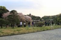 三渓園 桜花見 撮影 お出かけ 2018年春 一眼 カメラ