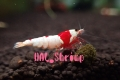 HAL_Shrimp