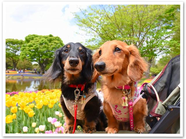 お花見☆昭和記念公園