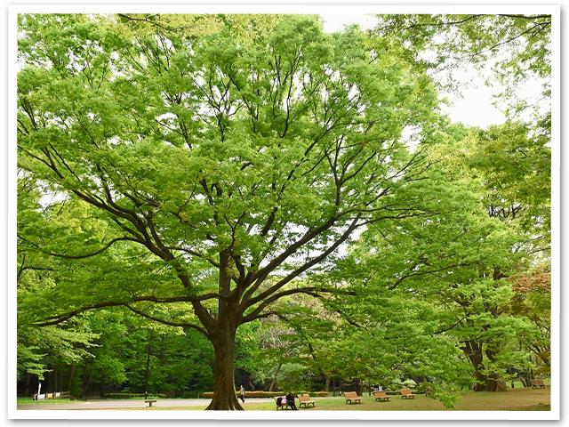 わんわんカーニバル☆代々木公園