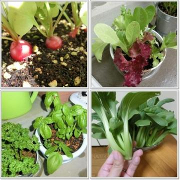 家庭菜園-800x600