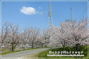 2018年桜1