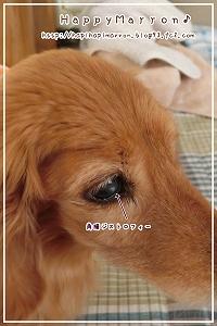 目が潰瘍化1