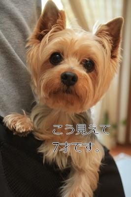 s-IMG_8168.jpg