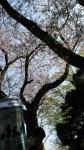 弘明寺公園のお花見