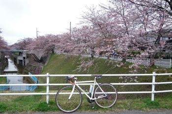 ARAYASAKURA2018042001.jpg