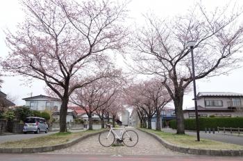 ARAYASAKURA2018042004.jpg