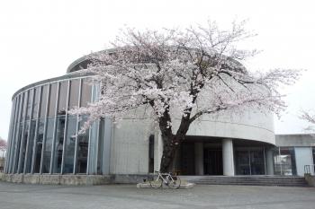ARAYASAKURA2018042005.jpg