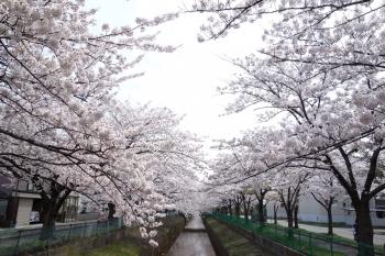 SOTOASAHIKAWA2018042201.jpg