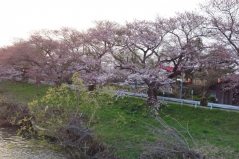 USHIJIMASAKURA2018041902.jpg