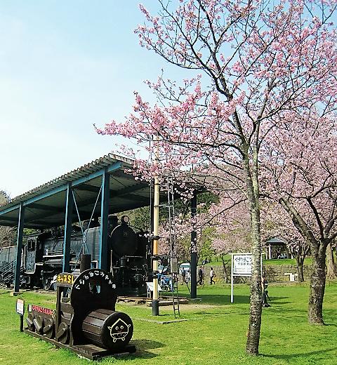 桜-013-2