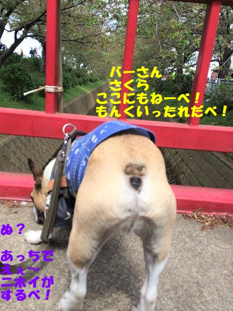 IMG_9974.jpg