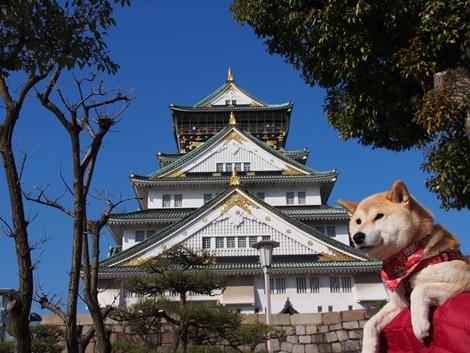 大阪城とさくら