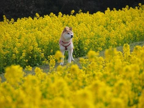 花さじきにて