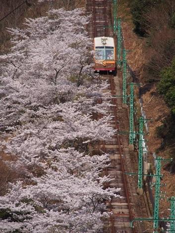 桜×ケーブル