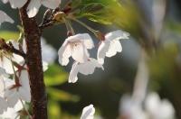 春4月13