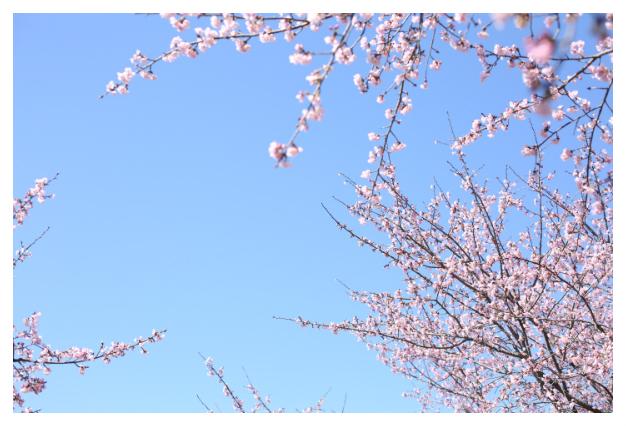 2018-04-02-01.jpg