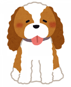 dog_cavalier_king_charles_spaniel.png