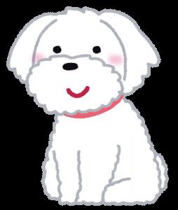 dog_maltese.png