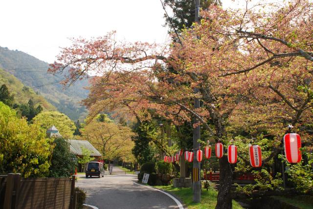 水分れ公園_桜祭り