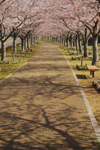 小野桜づつみ回廊