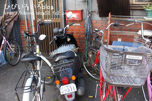 去年エア猫写したバイクに