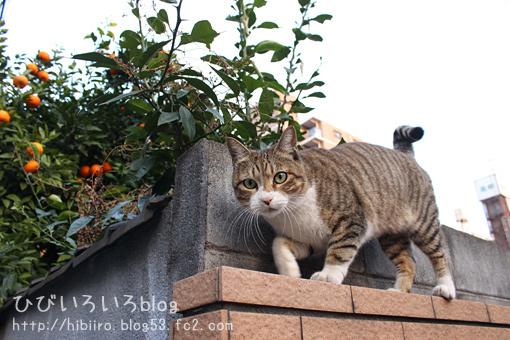 猫写2018(021)