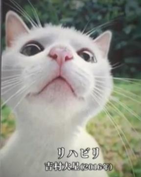 猫 リハビリ 鉛筆画