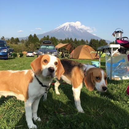 富士山 縮小