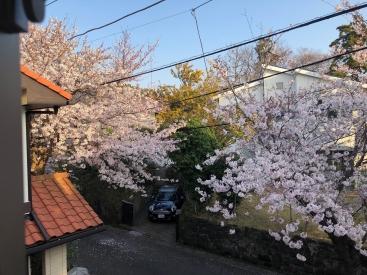 20180330sakura1.jpg