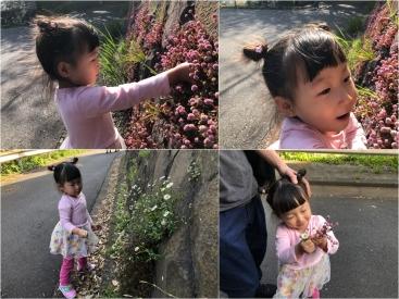 20180331葉菜は花
