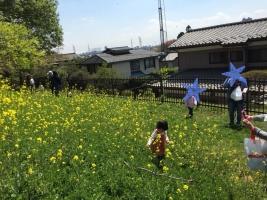 菜の花 4・10