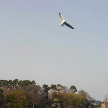 parkandbird