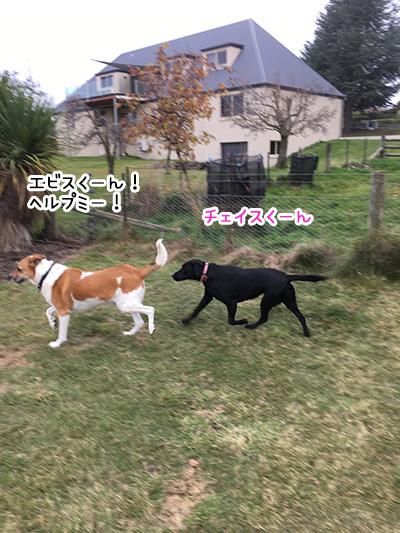 03062018_dog5.jpg