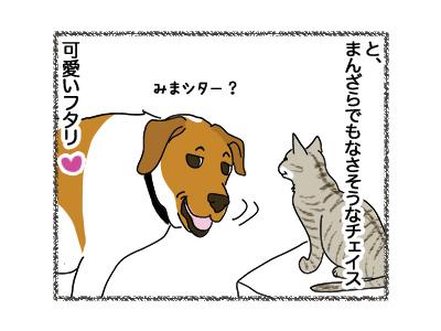 04062018_dog2.jpg